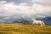 image of wild horse running  - Photo of a white horse in a beautiful landscape - JPG