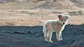 fotos de cachorro de favela fora da cidade
