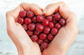 Haws In Heart Shap Hands