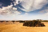 picture of semi-arid  - desert with vegetation - JPG