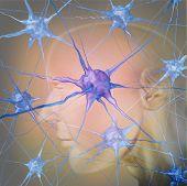 Neurônios humanos