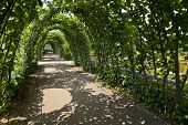 pic of kensington  - The beautiful trees that surround the Sunken Garden in Kensington Gardens London - JPG