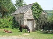 Horses And stables