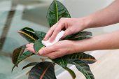 Cuidado de la planta