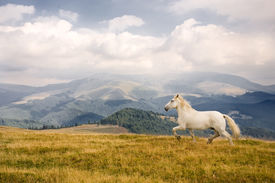 stock photo of wild horse running  - Photo of a white horse in a beautiful landscape - JPG
