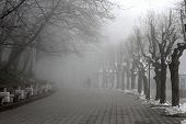 People Walking By Misty Road In The Park