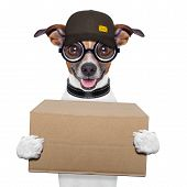 stock photo of jack-in-the-box  - postal dog delivering a big brown package - JPG