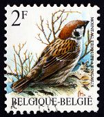 Postage Stamp Belgium 1989 Eurasian Tree Sparrow, Bird
