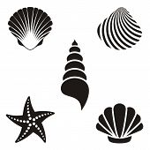 stock photo of scallop shell  - Set of various black sea shells and starfish - JPG