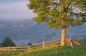 Morning landscape with lonely tree and fence in a mountain village. Carpathians, Ukraine, Europe