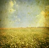 Daisy field. Grunge and retro style.