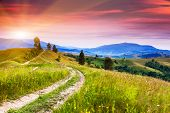 Beautiful blooming hills at dusk. Carpathian, Ukraine, Europe. Beauty world.