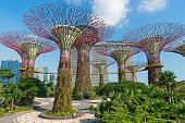 Supertrees At Gardens By The Bay Park, Singapore