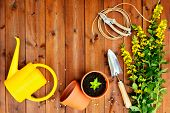 Copyspace frame with gardening tools and objects on old wooden background