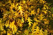 autumnal colored leafs outdoors surface top view background