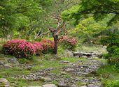 Summer Japanese Garden poster