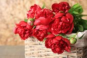 Beautiful pink peonies on brown wall background