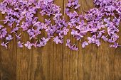 Lilac flowers on wooden background close up