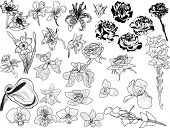 illustration with set of flowers sketches isolated on white background