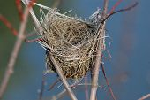 stock photo of bird-nest  - Abandoned nest - JPG