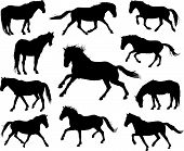 Set of different horses silhouettes.