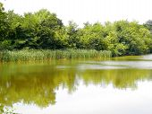 small lake with reeds