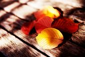 Autumn leaves on a wooden bench.