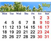 Calendar For May Of 2015 Year With Image Of Blossoming Chestnut