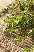 Raw Organic Green Savory
