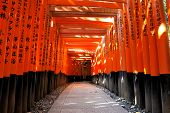 Ushimi Inari Taisha Shrine In Kyoto, Japan