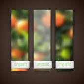 Set of banners with blurred background of orange grove and organic food label, vector design