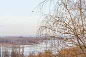 pic of weeping willow tree  - Weeping willow on a background of a winter landscape with a frozen river - JPG