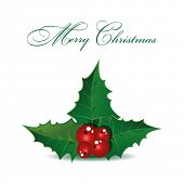 Holly berry Christmas symbol. Vector