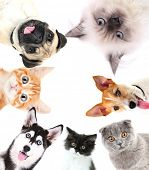 stock photo of cute dog  - Collage of cute pets isolated on white - JPG