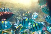 foto of sea-scape  - Coral fish in  Red Sea - JPG