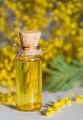 stock photo of mimosa  - Natural oil in bottle and mimosa flowers - JPG