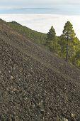 Volcanic Landscape In La Palma. Canary Islands. Spain