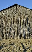 picture of tobacco barn  - Detail of an old tobacco farm facade - JPG