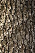 Bark Background Texture Pattern.