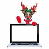 stock photo of christmas dog  - christmas dog with reindeer costume behind a laptop computer pc isolated on white background - JPG