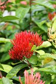 Red Flower On A Bush In The Tropics