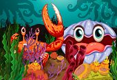 foto of clam  - A big crab and a clam under the sea - JPG