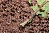 stock photo of termite  - Groups Of Termites Transporting Food in forest - JPG