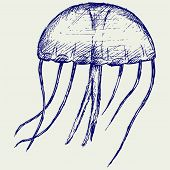 stock photo of jellyfish  - Jellyfish - JPG