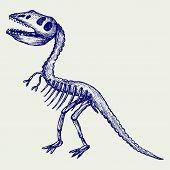 picture of tyrannosaurus  - Tyrannosaurus skeleton - JPG
