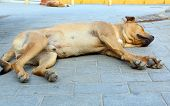 picture of homeless  - Low angle shot of two brown homeless dogs sleeping on the pavement in the city in the midday heat - JPG