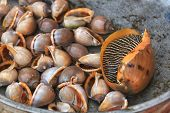picture of clam  - Traditional asian fish market stall full of fresh shell clam seafood - JPG