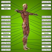 stock photo of male body anatomy  - Concept or conceptual 3D male or human anatomy - JPG
