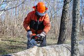 stock photo of man chainsaw  - Action when a lumberjack is cutting a big tree trunk with a chainsaw - JPG