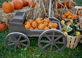 Holiday pumpkins in a cart